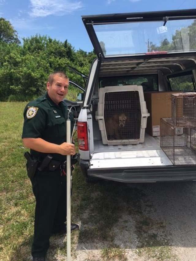 Perro rescatado por policia