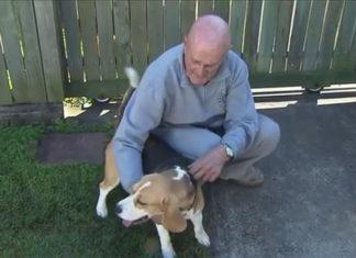 Perro salva la vida de tres familiares en un incendio