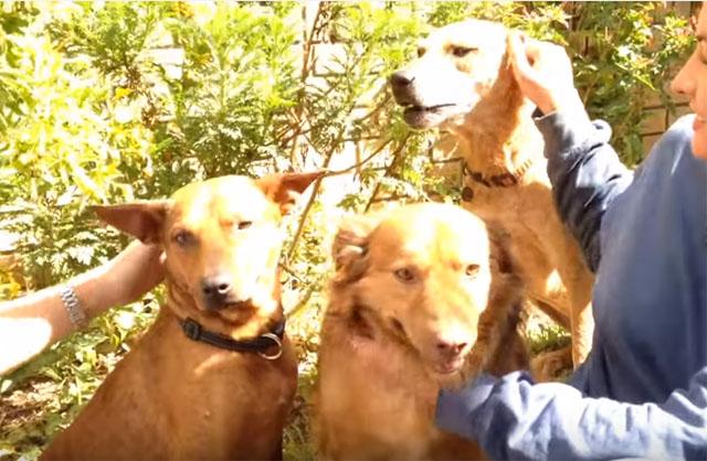 Perros felices en nuevo hogar