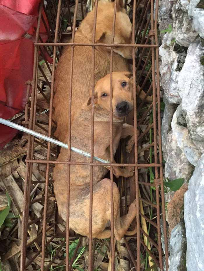 Perros iban a ser sacrificados en Yulin