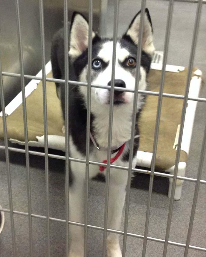 Perros rescatados en Dallas