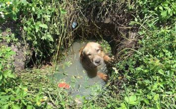 Policia adopta a un perro que rescato de un pozo