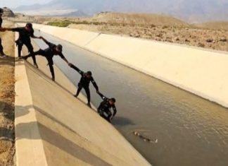 Policia del Peru hicieron una cadena humana para rescatar a un perro de un canal