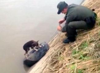 Policía usó una llanta para rescatar a un perro de un canal