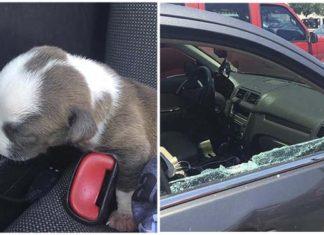 Policias rescataron a un perro recién nacido de un auto caliente