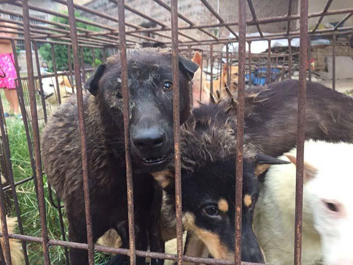 Rescatan 20 perros antes de ser sacrificados