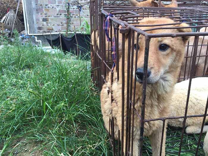 Rescatan 20 perros en Yulin