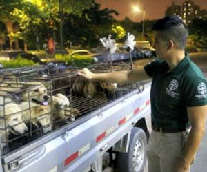 Rescatan animales en Yulin
