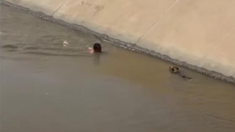 Rescatan perro de un canal