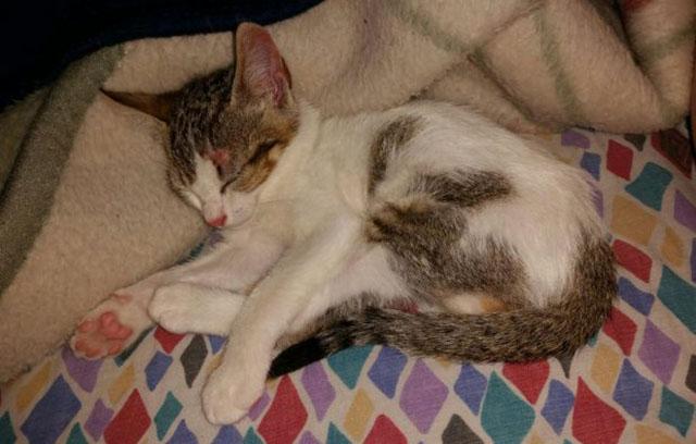 Rescataron a una gata de 2 meses que habia quedado sepultada en Almeria