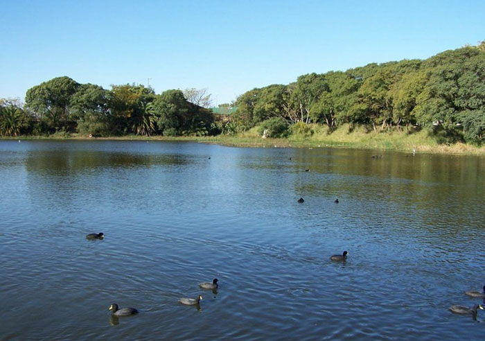 Reserva ecologica costanera