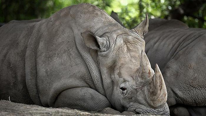Rinoceronte en el Zoologico de Buenos Aires
