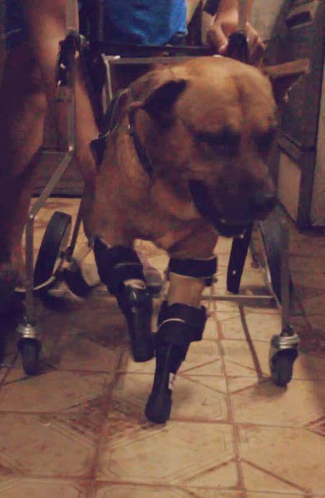 Rupave y sus protesis