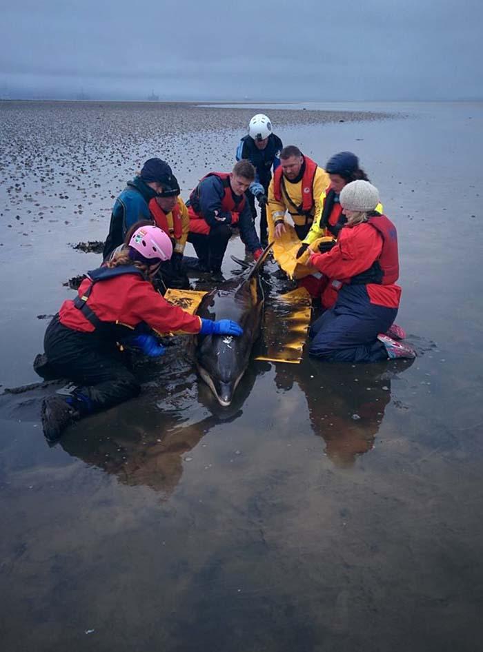 Salvan la vida de un delfin