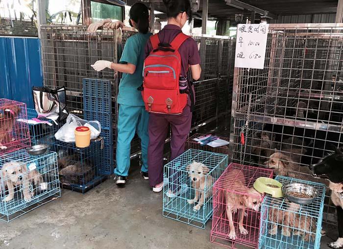 Salvaron más de mil perros en festival de Yulin