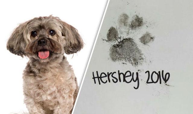 Su veterinario le entregó una tarjeta de condolencia por la muerte de su perro