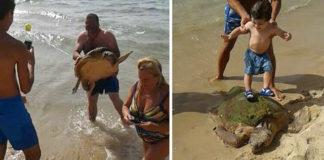 Tortuga fue sacada del mar para ser maltratada por la gente que se tomaba fotos con ella