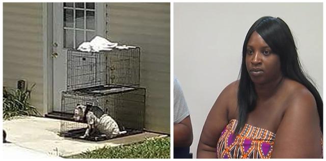 Vecinos luchan por salvar a un perro que dejan enjaulado al sol todo el tiempo