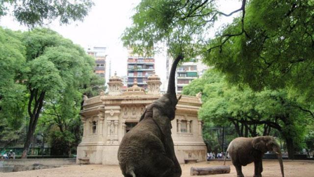 Zoologico de Buenos Aires cerrara sus puertas