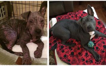 A este perro lo abandonaron porque estaba enfermo pero fue rescatado