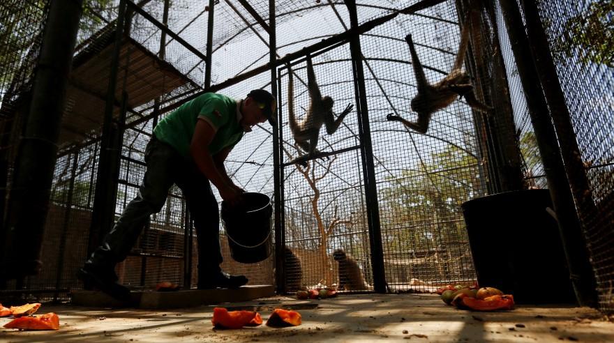 Animales mueren de hambre en el zoológico de venezuela