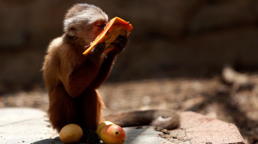 Animales mueren en zoológico por falta de alimentos