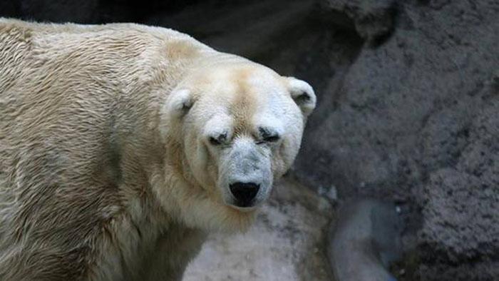 Arturo, el animal más triste del mundo