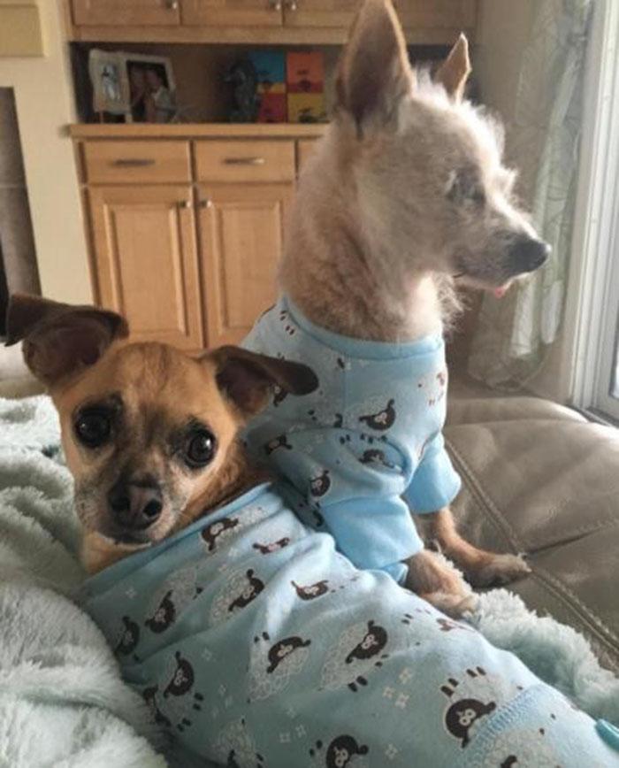 Biskit y Buster