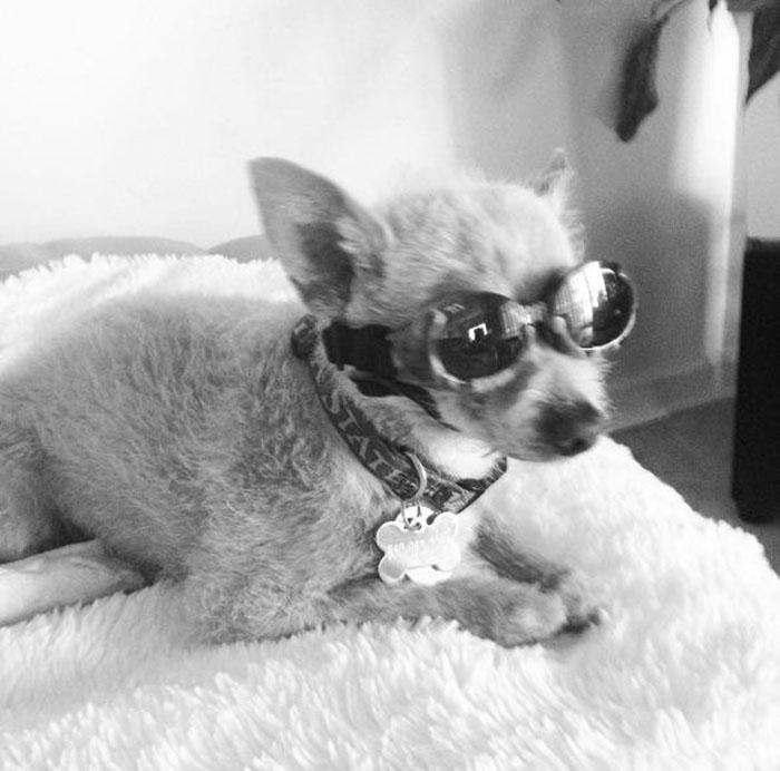 Buster usando lentes