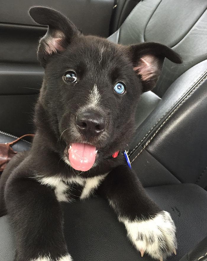 Cachorro en su primer día en casa