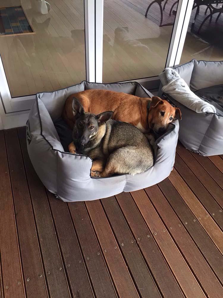 Caesar y Saskia duermen juntos