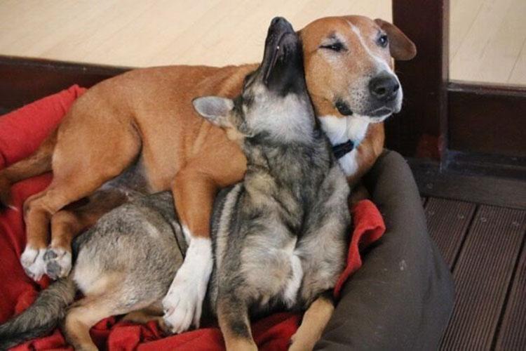 Caesar y Saskia se adoran