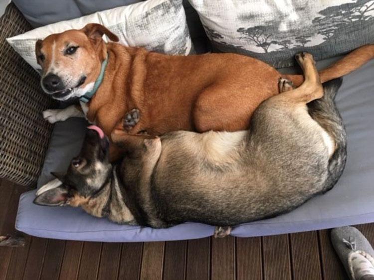 Caesar y Saskia se quieren mucho