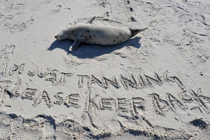 Crias de foca estan muriendo