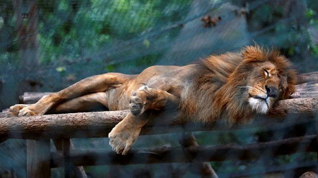 Dejaron morir de hambre a 50 animales en el zoológico de venezuela