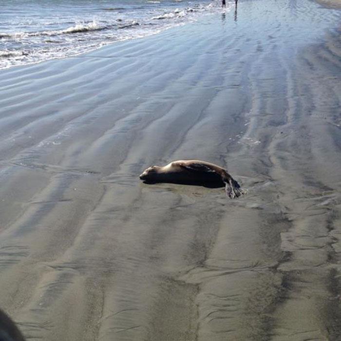 Dejen a las crias de foca en la playa