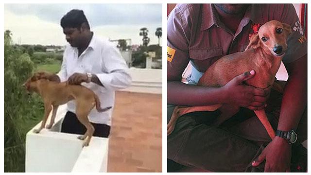 Detienen a los hombres que lanzaron a un perro desde la terraza