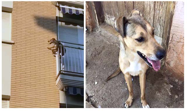 Este perro se lanzó del balcón