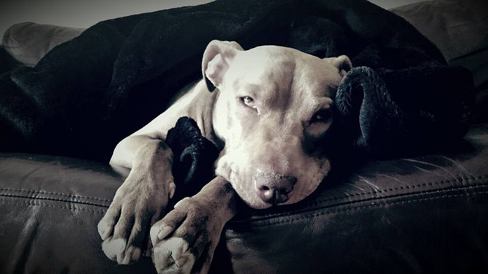 Hank es un perro amoroso