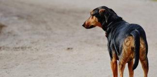Holanda un pais sin perros callejeros