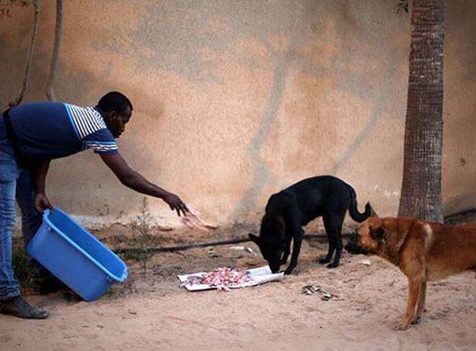 Hombre palestino dedica su vida a rescatar perros en la franja de gaza