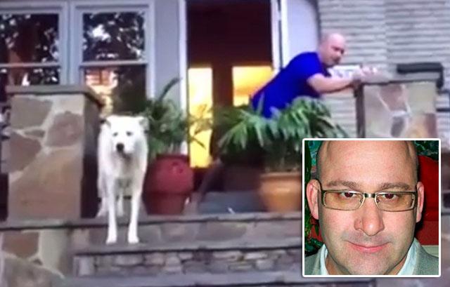 Hombre que asustó a su perro con fuegos artificiales es acusado de crueldad animal