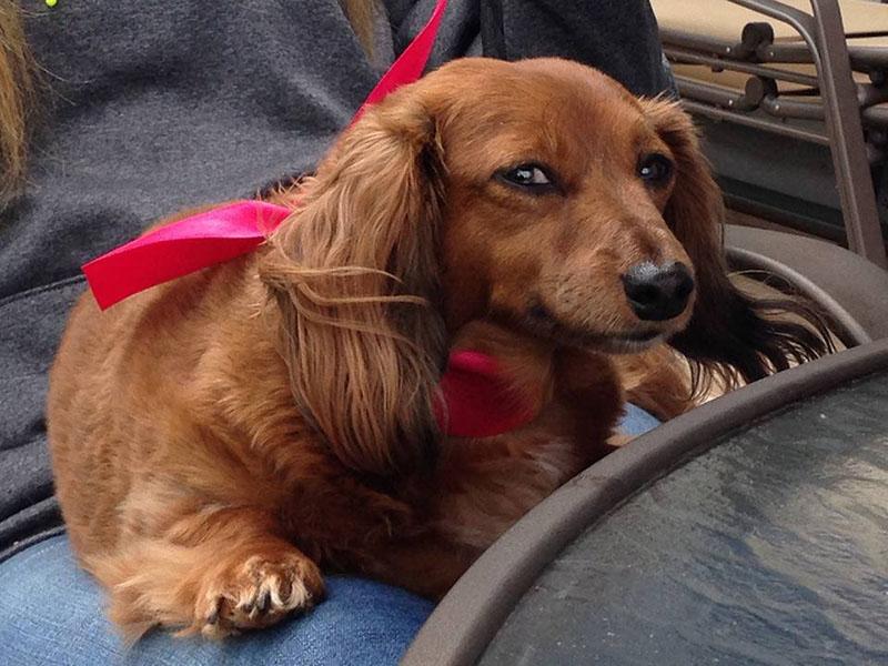 Llevó al perro de su exnovio a un refugio
