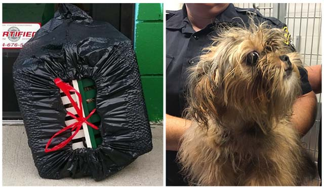 Mujer abandonó a un perro enjaulado dentro de una bolsa de basura