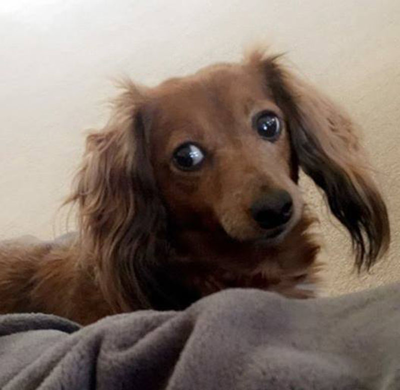 Mujer secuestró al perro de su exnovio