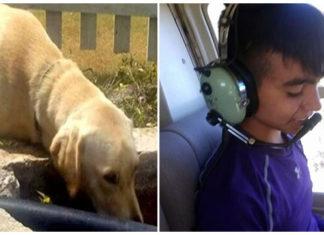 Niño perdido sobrevive gracias a un perro