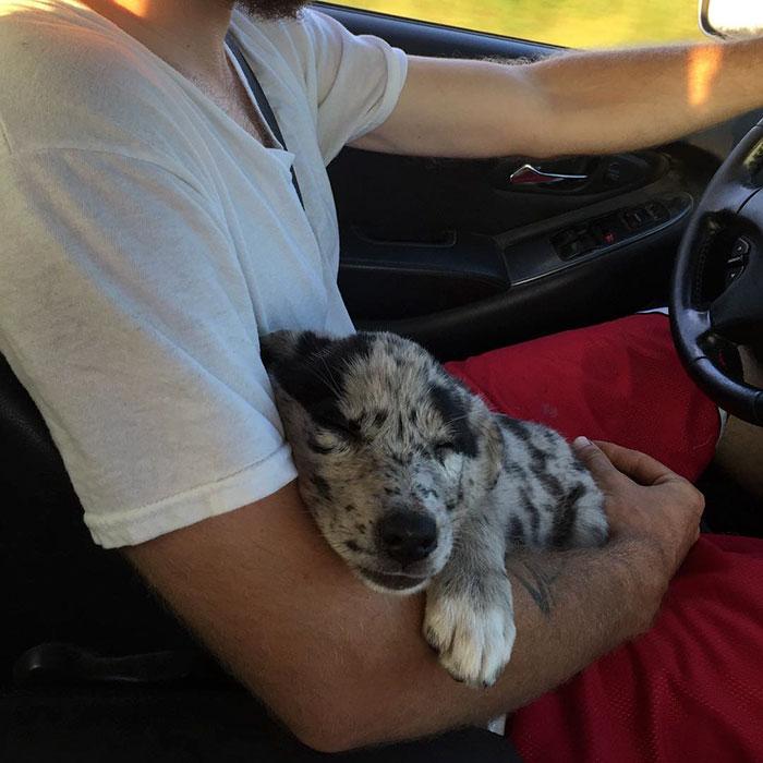 Perro adoptado camino a su nuevo hogar