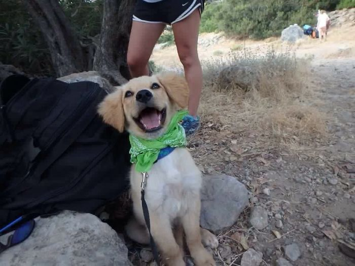 Perro adoptado en Creta
