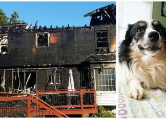 Perro corre a salvar a su familia de un incendio