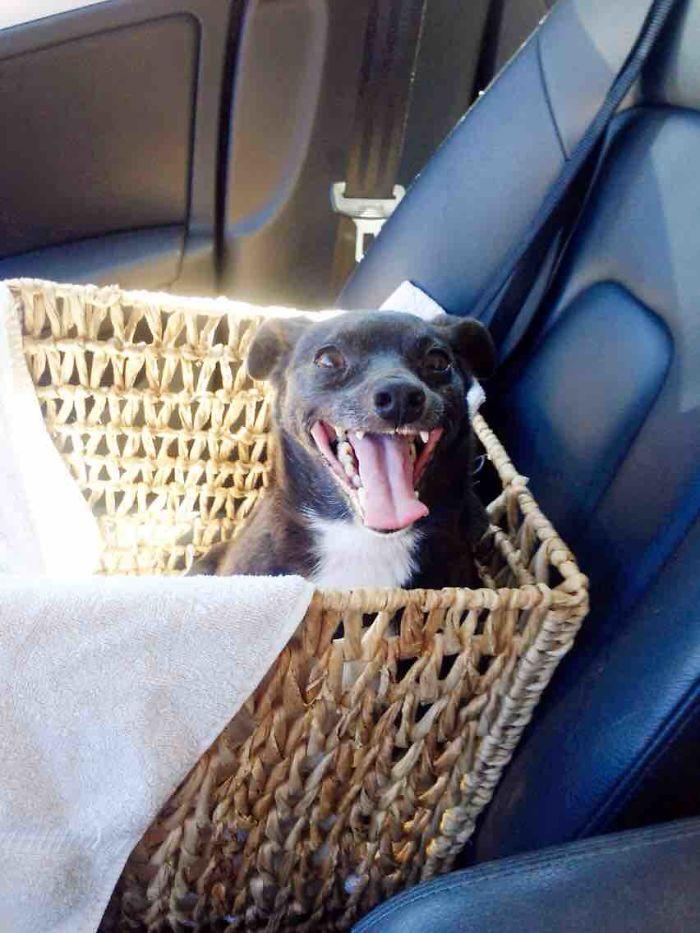 Perro de 11 años adoptado